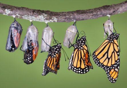 life-is-change-growth-optional